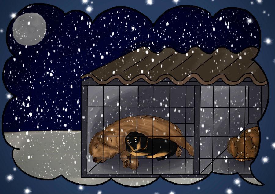 Storie di cani: disegno in cui il cane Candito dorme in canile vicino al cane Rosy